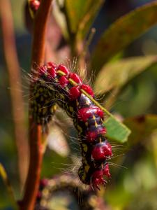 Fall Insects Caterpillar