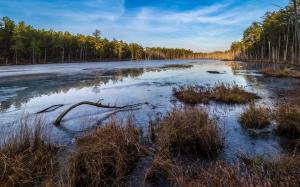 Winter in the Pine Barrens