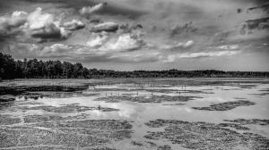 Phtographer Louis Dallara Submitted To Celebrate The Pinelands National Reserve